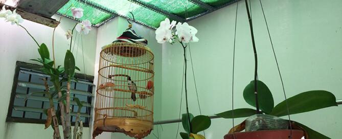 Cach trong hoa lan