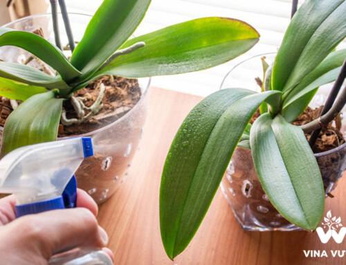 Ý nghĩa của việc tưới nước vôi trong cho lan và cách thực hiện